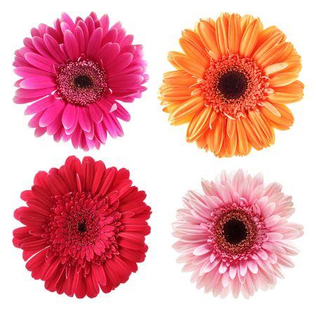Daisy fleurs isolé sur fond blanc Banque d'images