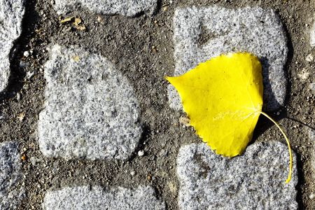 road autumnal: Yellow autumn leaf on old cobblestone road