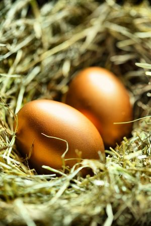 Two gold eggs in nest close up photo