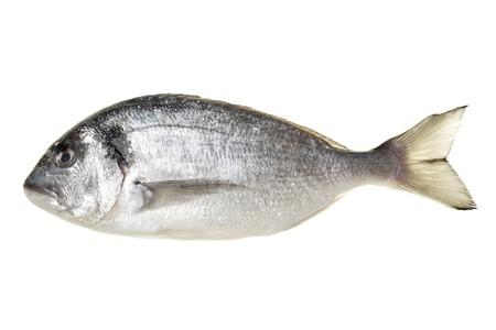 Dorada fish isolated over the white background photo