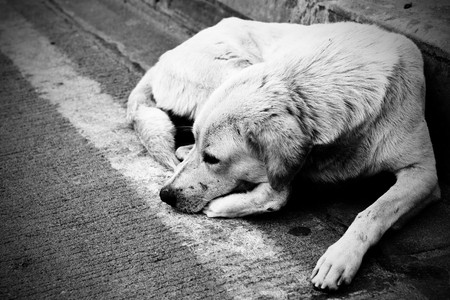 sad dog: Homeless stray dog laying at urban road. Black and white image. Stock Photo