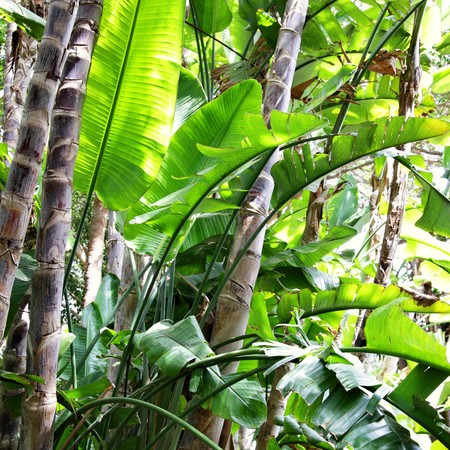 Lush tropical forest. Square cropping. photo