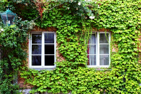 cosiness: Old house with ivy in Germany