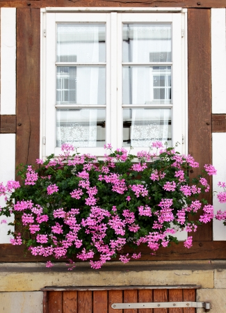 comfortableness: Windows of old house with flowers, Germany