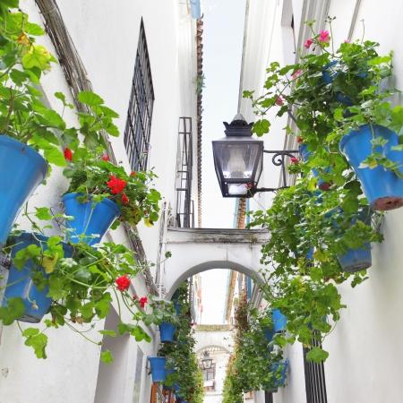 コルドバ (アシストマカルー ・ デ ・ ラス ・ フローレス) の花と狭い通り