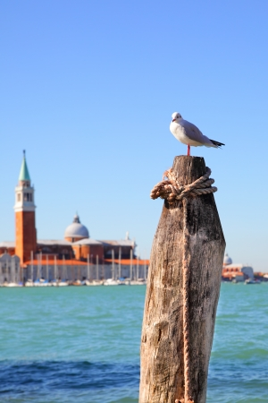maggiore: Sea gull and San Giorgio di Maggiore church in the background, Venice, Italy