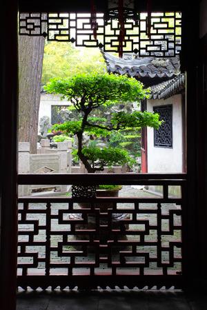 Large bonsai tree in ancient Yu Yuan Garden in Shanghai, China  photo