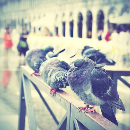Doves on Saint Mark photo