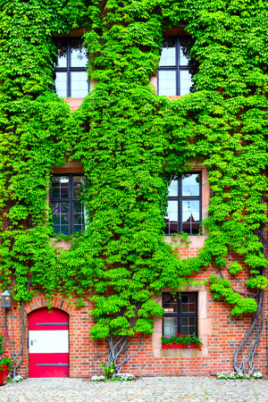 comfortableness: Old house overgrown with green ivy