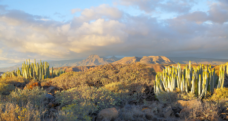 exotics: Beautiful panoramic view of desert with plants at sundown on Tenerife, Canary Islands