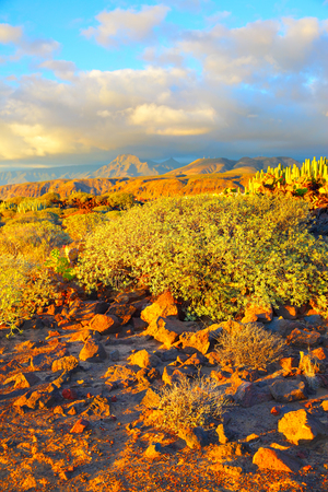 Beautiful view of rocky desert at sundown in Tenerife, Canary Islands Stock Photo