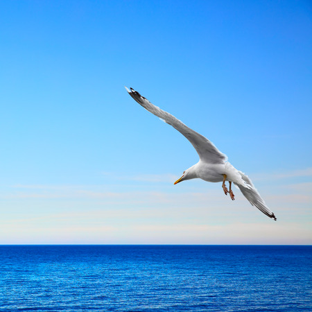 Beautiful seascape with flying seagull Stock Photo