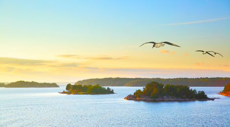 Scandinavian landscape with small islands in the archipelago of Stockholm at sundown and flying sea gulls. Sweden. Stock Photo