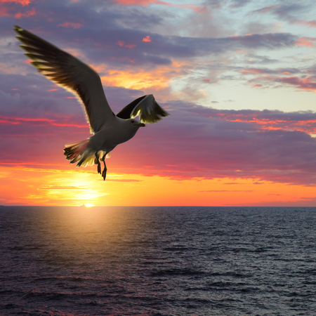 Scenic sunset seascape with taking wings sea gull Stock Photo