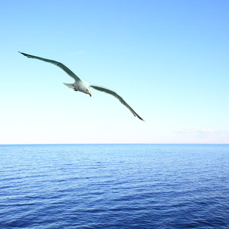 Beautiful seascape with soaring seagull over sea. Copyspace composition