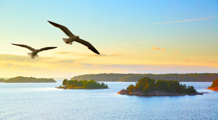 Water landscape with small islands at sunset and flying seagulls. Sweden. Stock Photo