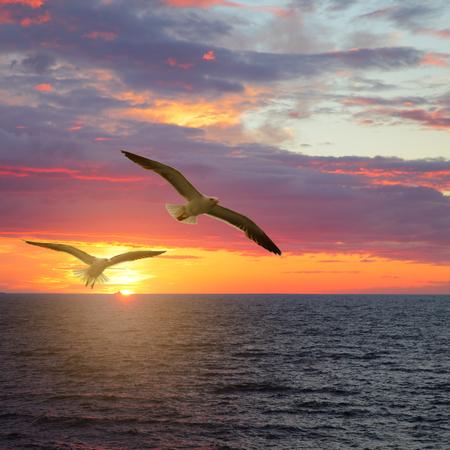 Scenic sunset seascape with sea gulls