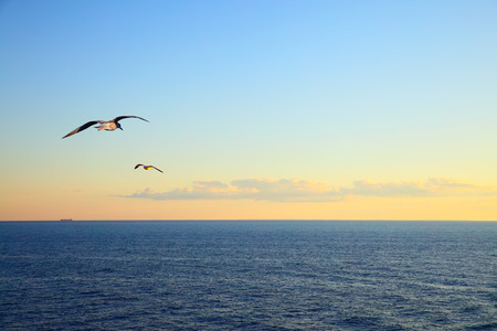 Sea at sunset and flying seagulls