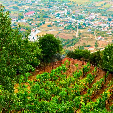 Monastery vineyard on terrace in Meteora rocks, Greece