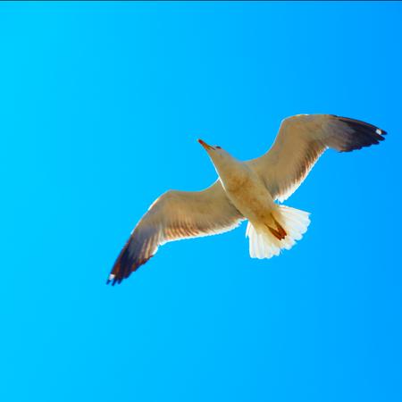 Flying sea gull against the blue sky