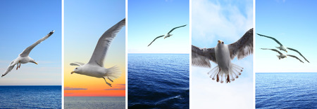 Birds - Flying seagulls over sea -- Set of HD 16:9 screen wallpapers for smartphone