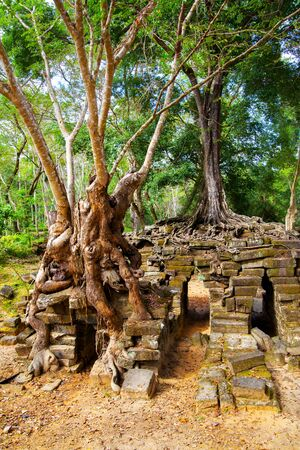 Trees with long roots on the ancient ruins in The Angkor, Cambodia Reklamní fotografie