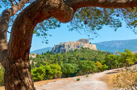 Picturesque view of Athens with The Acropolis and old pine in the park, Greece - Greek landscape 写真素材