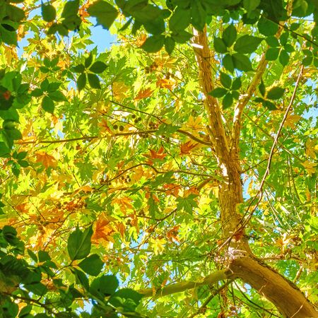 Green leaves in the sunlight on a sunny day - leafage background 写真素材
