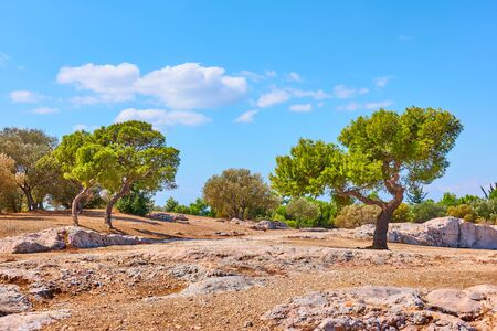 Public park on the Hill of the Nymphs in Athens on summer sunny day, Greece - Greek landscape 写真素材