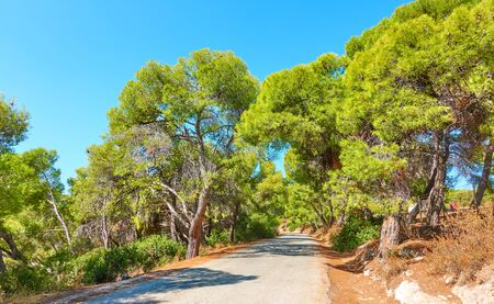 Road through the pine forest in Aegina Island on sunny summer day, Saronic Islands, Greece - Landscape 写真素材