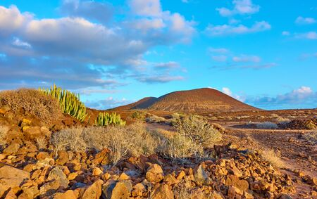 Desert with cacti and volcano at sunset inTenerife Island, Canary, Spain - Landscape Stock Photo