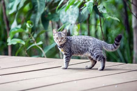 gray cat: gray cat