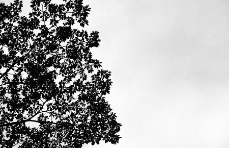 ray trace: tree silhouettes on sky Stock Photo