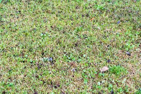 grassy plot: C�sped verde para el fondo y la textura Foto de archivo
