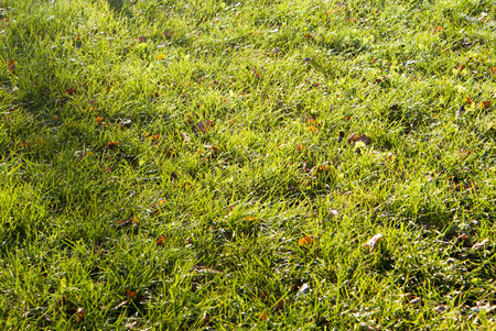 grassy plot: Green lawn for background and texture