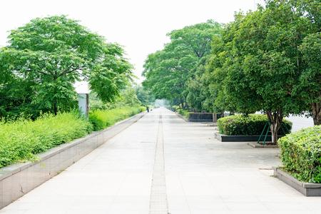 tree-shaded path Stock Photo