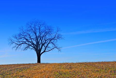 A tree under a blue sky in a farm field  Stock Photo - 862645