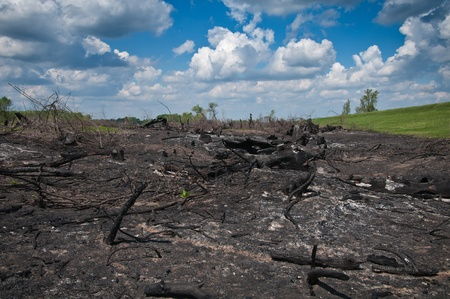 Forest fire and the new life thereafter photo