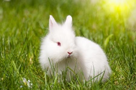 Conejo con margaritas
