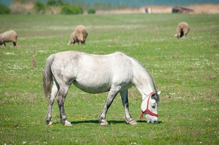 Horse on the pasture Stock Photo - 13392737