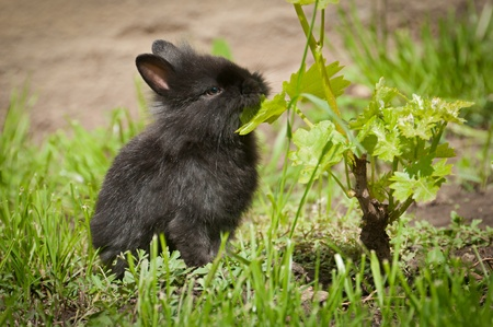 Little rabbit Stock Photo - 13584168