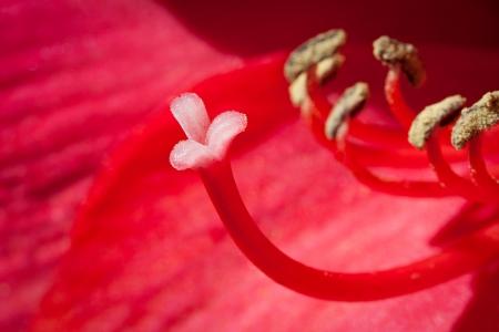 wild red flower  photo