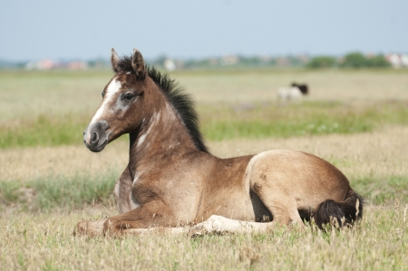 Foal on a summer pasture Stock Photo