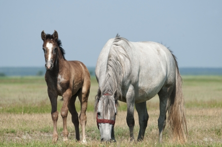 Mares and foals photo