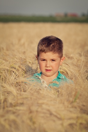 Happy boy in the field of wheat on sunny day Stock Photo - 13991625