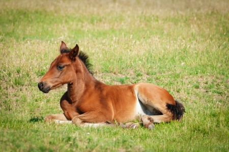 Little foal Stock Photo - 14122319