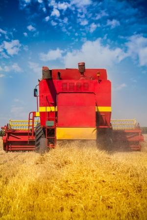 Combine harvesting wheat photo