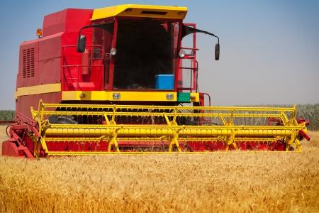 cosechadora: Combine la cosecha de trigo