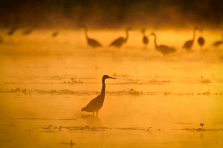 Herons at sunset photo