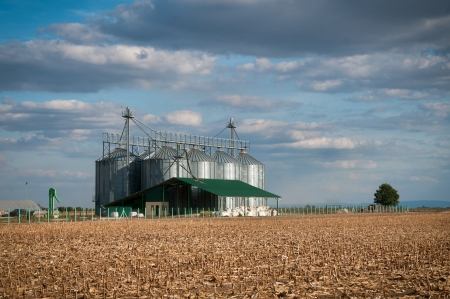 silver silos in corn field photo